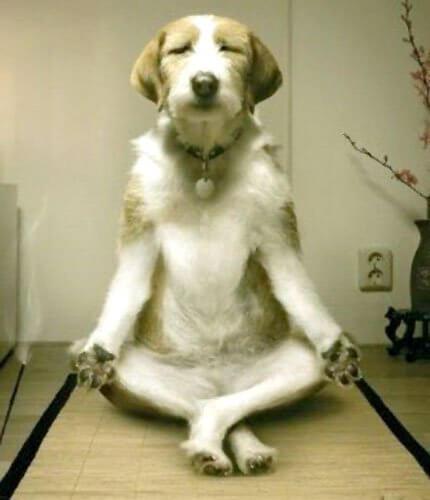Funny Dog Meditation