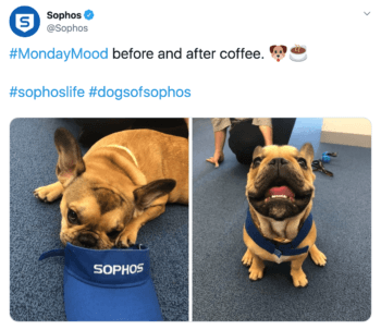 sophos b2b brand tweets a french bulldog with branded gear